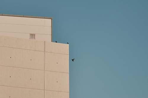 birds three birds beside building city