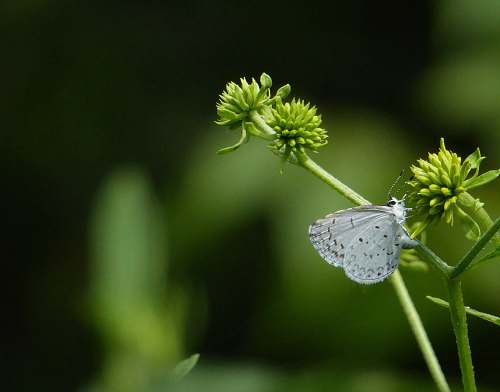 plant macro photography of white butterfly hanging on green plant insect