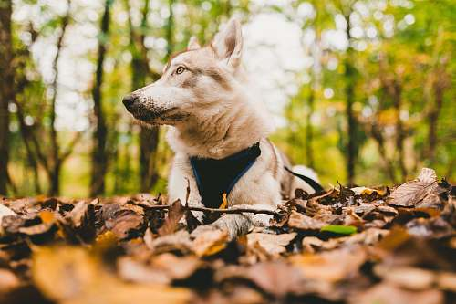 dog closeup photo of white dog on withered leaves pet