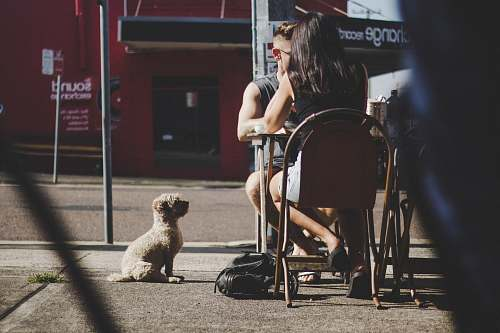 furniture white puppy human