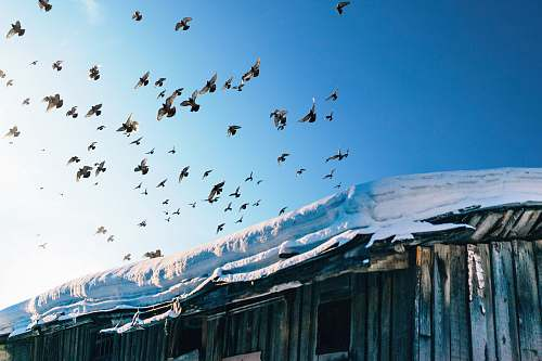 russia photography of flock of birds flock