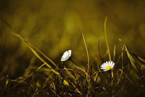 plant selective focus photography of white petaled flowers grass