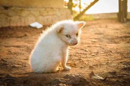 animal white animal pet