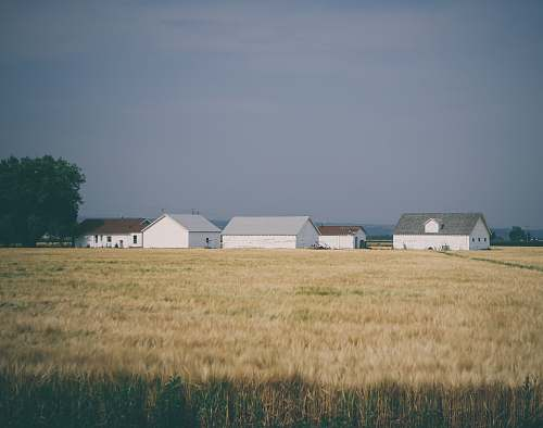 house barn houses surrounded with wheat field under grey sky rural
