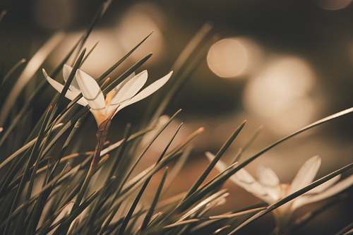 grass selective focus photography of white petaled flowers plant