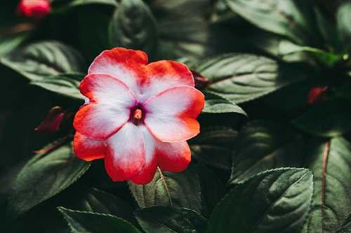 plant  blossom