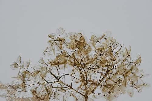 plant brown leafed tree stem