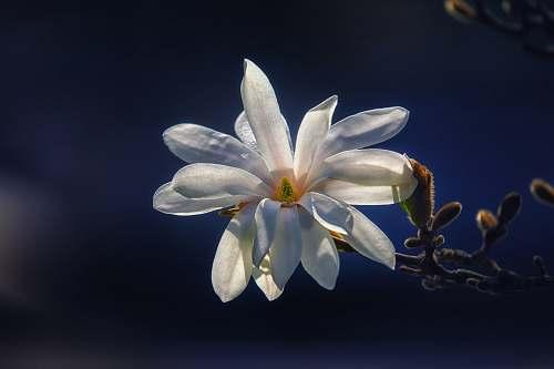 blossom closeup photo of white cluster petaled flower petal