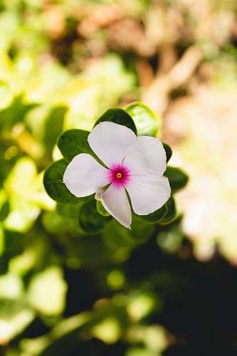 blossom closeup photography of white 5-petaled flower geranium