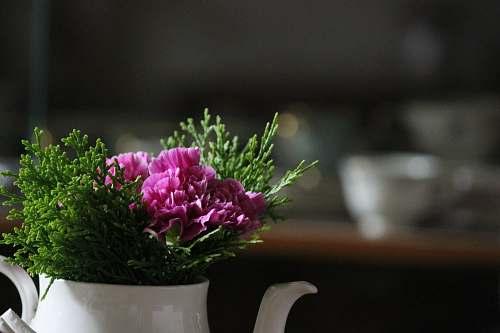 plant focus photo of purple petaled flowers vase