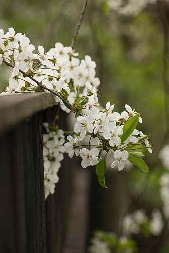 plant macro shot of white flowers blossom