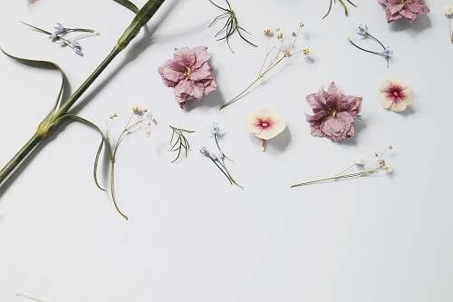 floral pink flowers durham