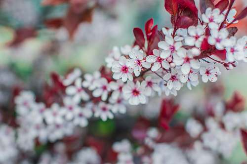 blossom selective focus photography of white-and-pink petaled flowers nature