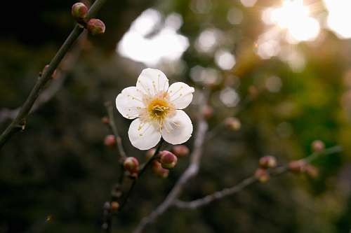 blossom selective focus photography of white petaled flower plant bud