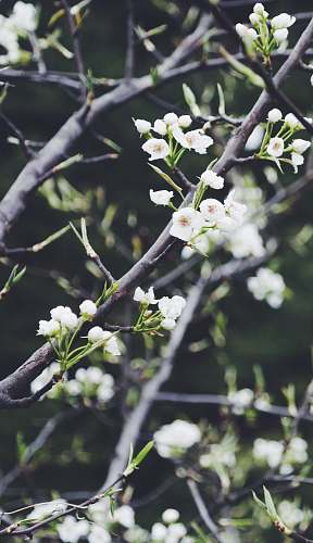 blossom selective focus photography of white petaled flower tree spring