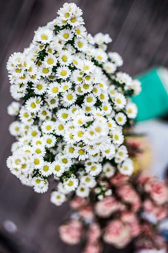 human shallow focus of white and yellow flowers during daytime flowers