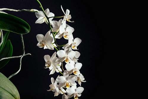 plant tilt-shift lens photography of white flowers orchid