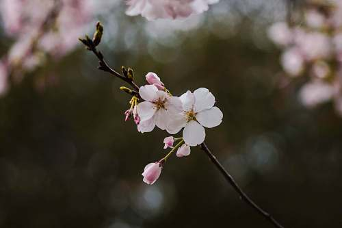 plant white and pink flowers in tree blossom