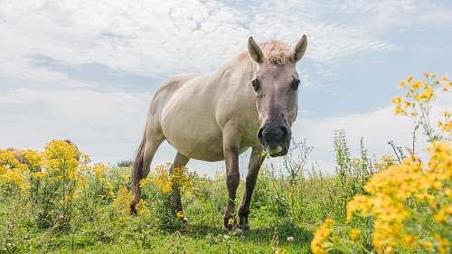 animal white donkey on grass horse