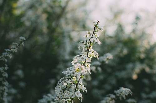 plant white flower plant branch