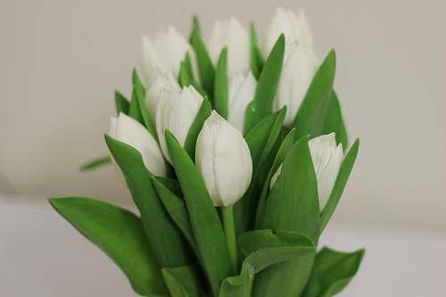spring white flower plant