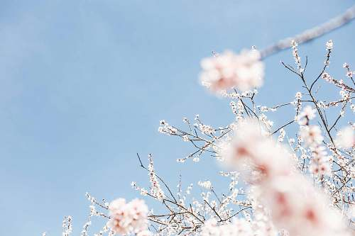 blossom white flowering tree during daytime spring