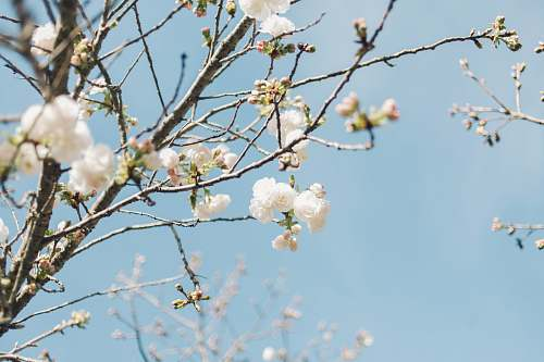 plant white flowers in tree branch during daytime blossom