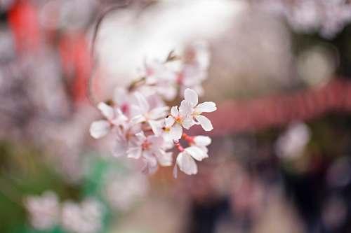 plant white ixora flower blossom