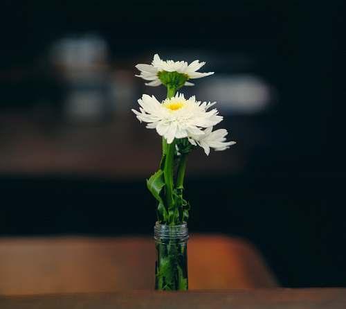 plant white petaled flower on clear glass vase blossom