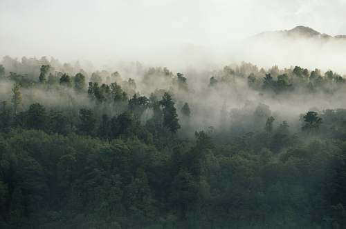 nature green leafed trees covered by fog during daytime fog