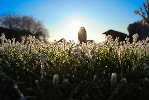 grass shallow focus photography of white and green plant outdoors