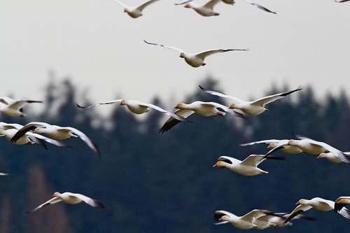 bird flock of seagull during daytime birds