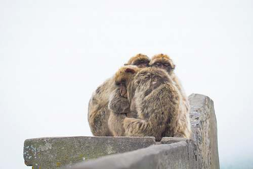 primate shallow focus photography of brown monkey hugging each other family