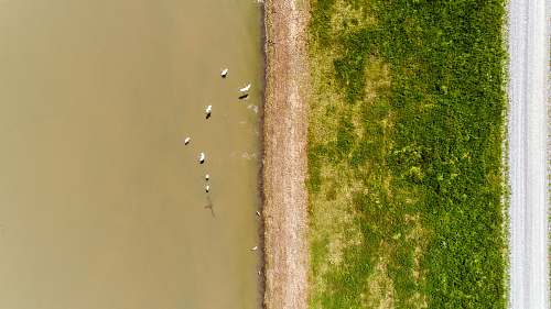 flood aerial photography of ducks on body of water birds