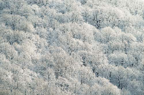 snow aerial photography of white leafed trees frost