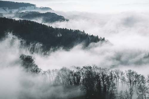 nature bird's eye view photography of trees and mountains with fog fog