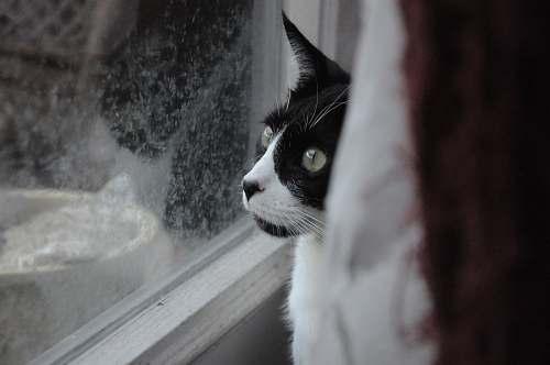 animal cat sitting near glass window cat