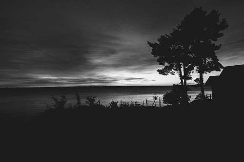 black-and-white grayscale photo of ocean and trees traverse city