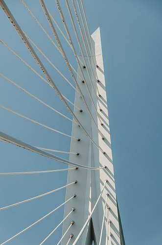 erasmusbrug low angle photography of cable bridge cable