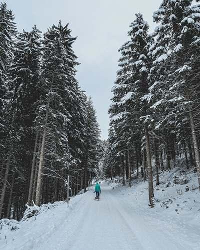 fir person walking on snowy forest trail austria