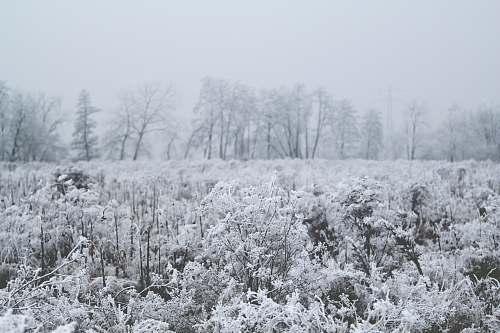 ice plant with snow snow