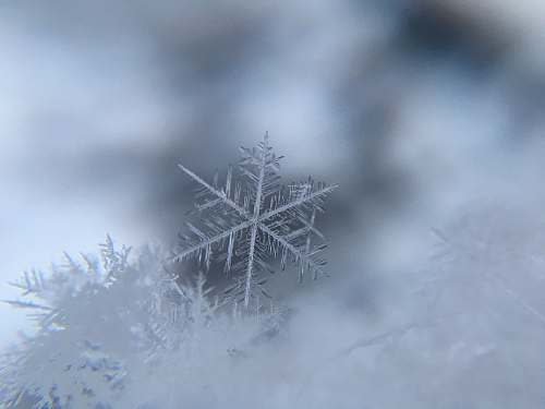 snow shallow focus photography of snowflake winter