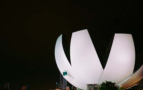 building white flower form building at night singapore