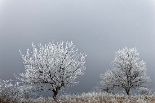 snow white tree plants on gray sky during daytime frost