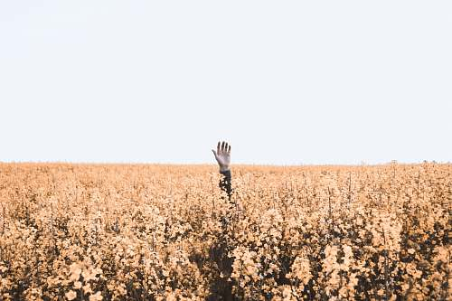 grass person's hand over brown floral field during daytime field