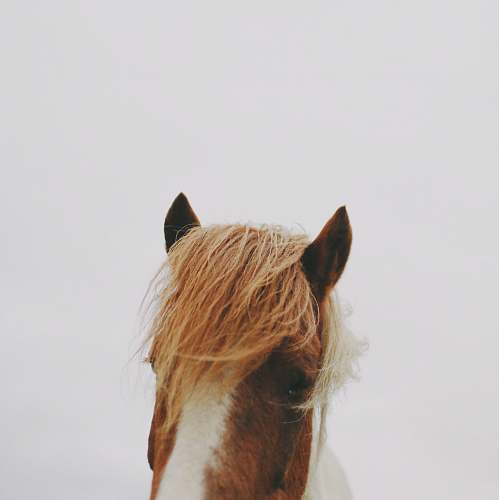 brown brown and white horse animal