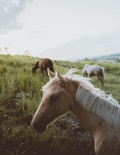 animal tilt-shift lens photography of horse herd on grassland during daytime australia