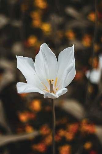 person white petaled flower flower