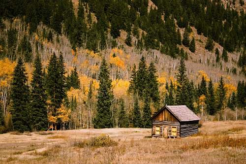 cabin brown wooden cabin shack
