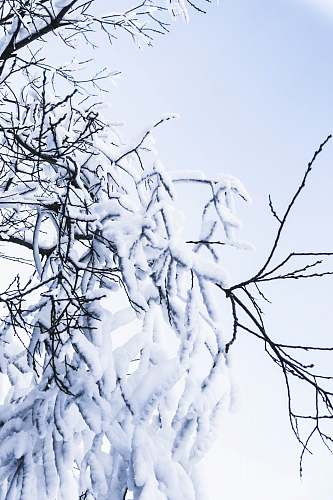 nature snow covered tree outdoors